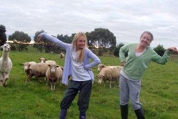 Типотинг с овцами