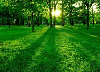 Трава на поляне