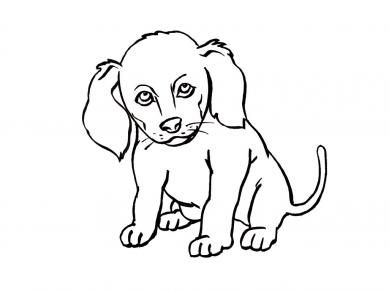 Собака знак зодиака по китайскому календарю