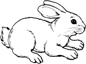 Кролик знак зодиака по китайскому календарю
