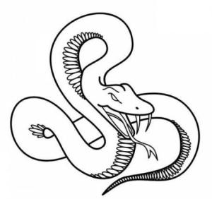 Змея знак зодиака по китайскому календарю