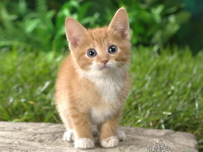 как назвать кошку девочку имена