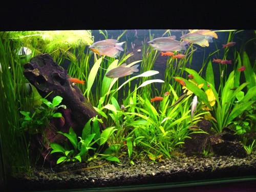 как сделать аквариум в домашних условиях