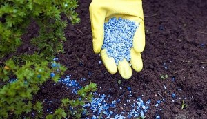 С какой целью гранулируют минеральные удобрения