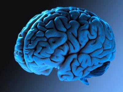 Что раньше называли мозговицей