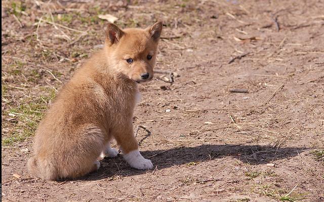 Сколько пород собак существует в мире
