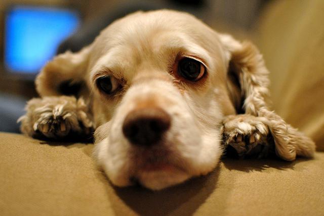 Какая нормальная температура у собаки