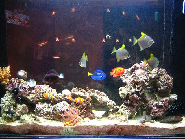 Чего зацветет вода в аквариуме?