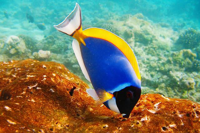 Почему гибнут рыбы в аквариуме?