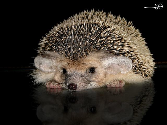 Почему ёж и уж спят зимой?