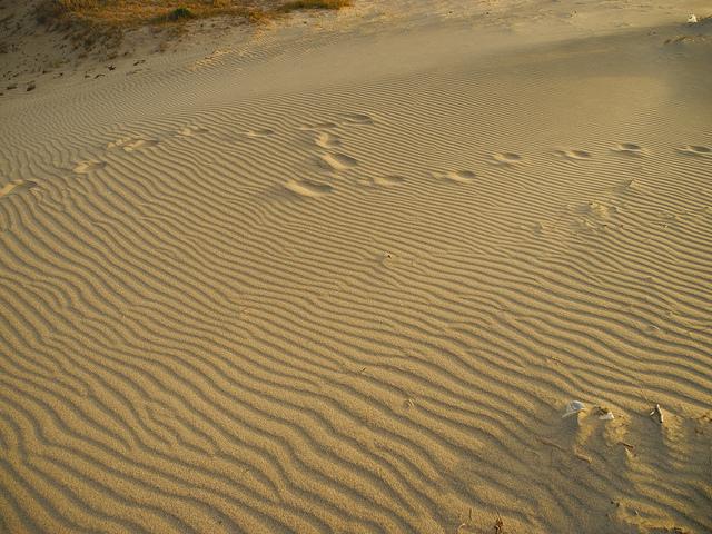 Цена тонны песка в 2016 году