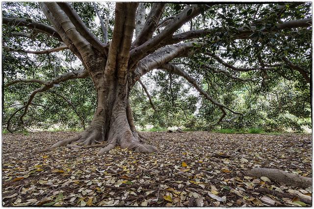 Цена спила дерева в 2016 году