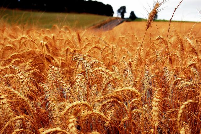 Цена тонны зерна в 2016 году